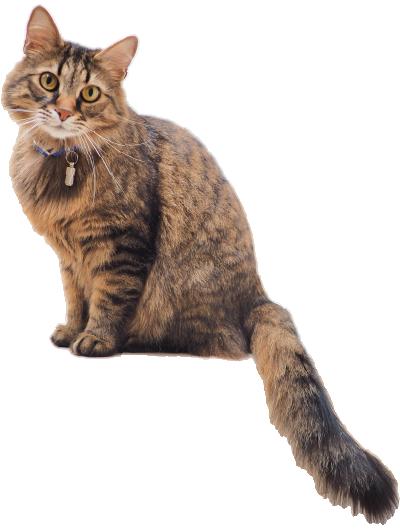 contact-cat-4